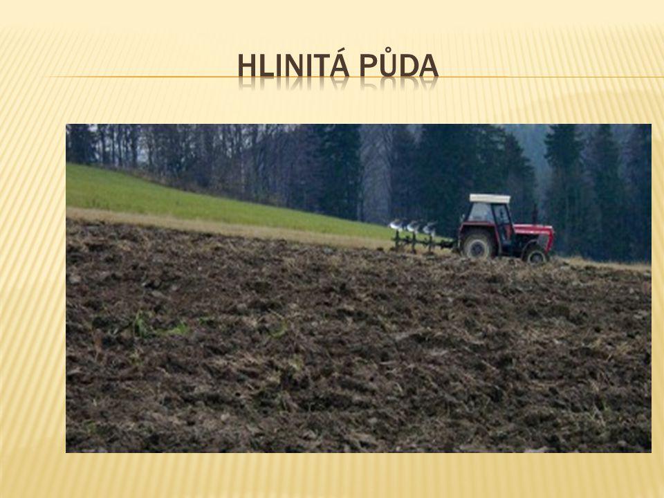 Hlinitá půda
