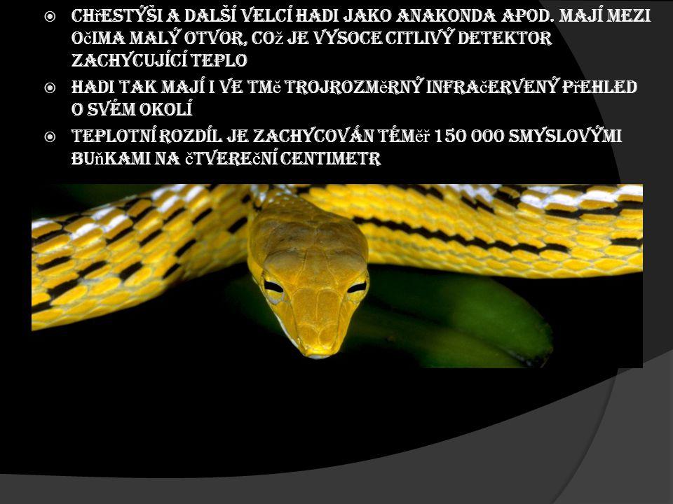 Chřestýši a další velcí hadi jako anakonda apod