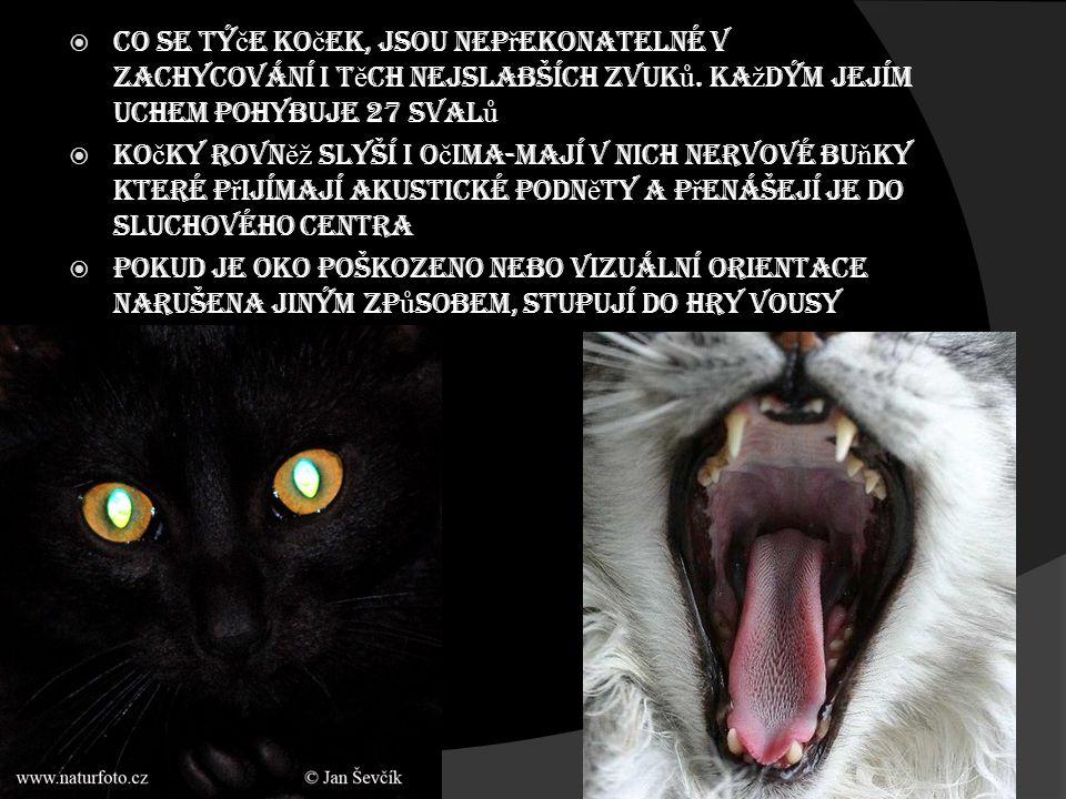 Co se týče koček, jsou nepřekonatelné v zachycování i těch nejslabších zvuků. Každým jejím uchem pohybuje 27 svalů