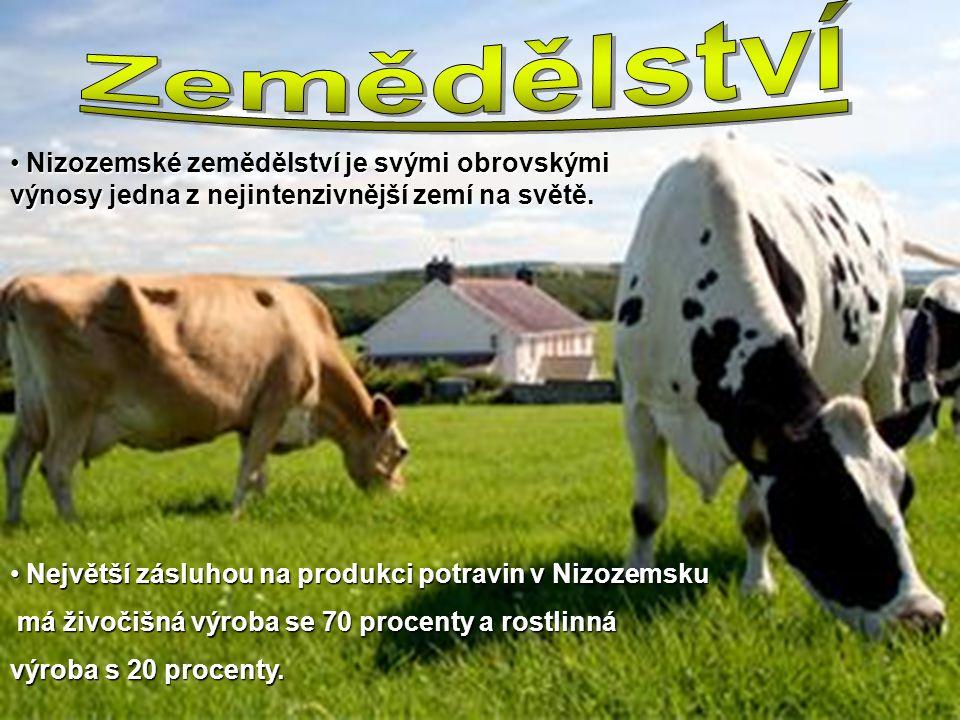Zemědělství Nizozemské zemědělství je svými obrovskými