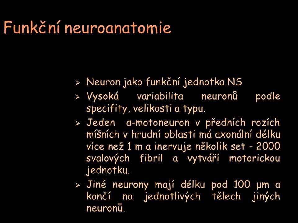 Funkční neuroanatomie
