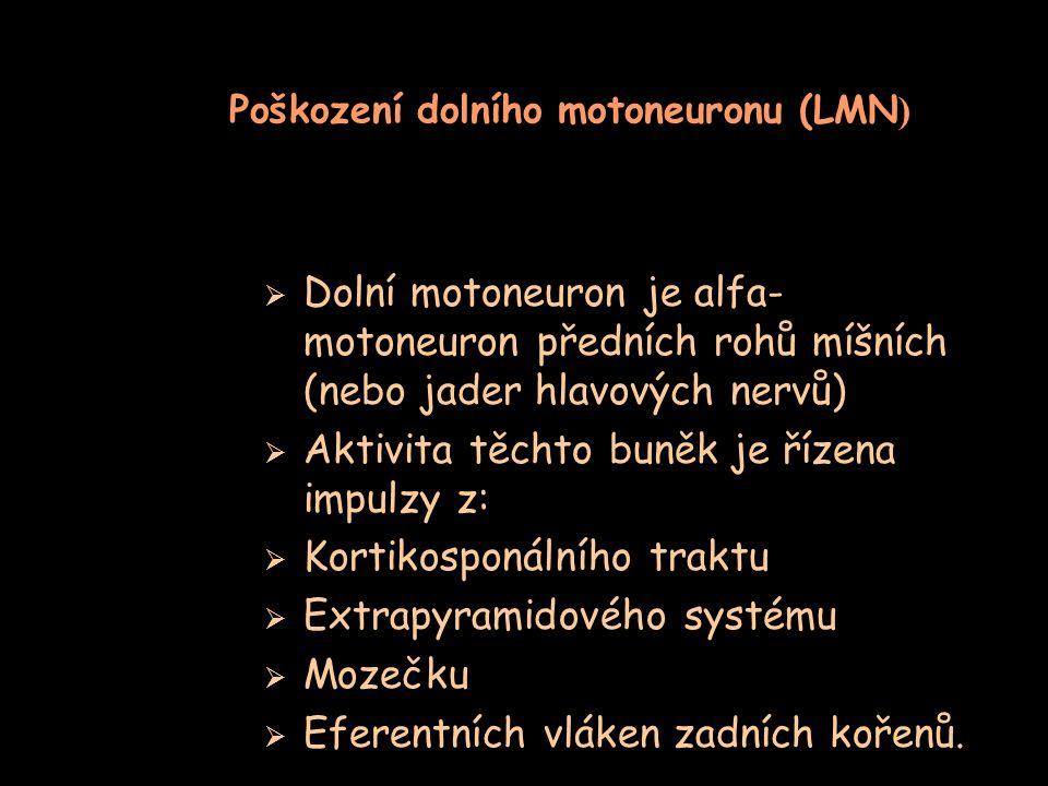 Poškození dolního motoneuronu (LMN)
