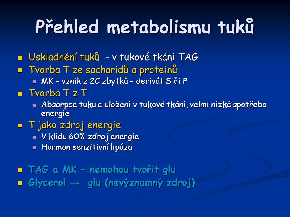 Přehled metabolismu tuků