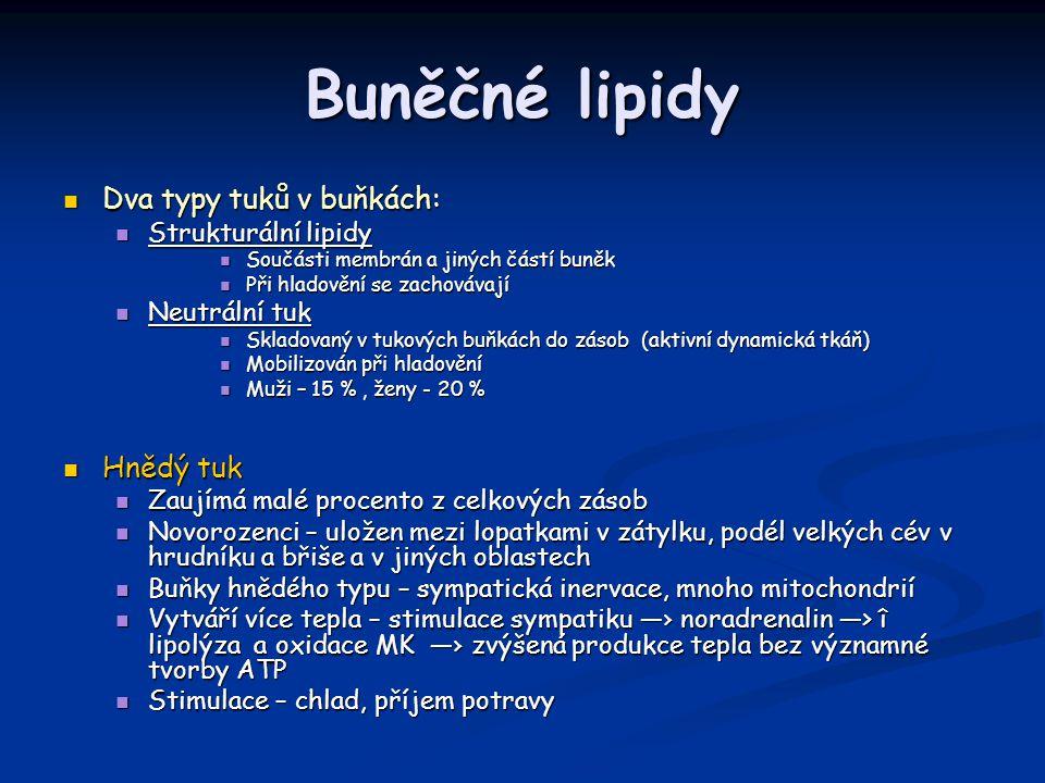 Buněčné lipidy Dva typy tuků v buňkách: Hnědý tuk Strukturální lipidy