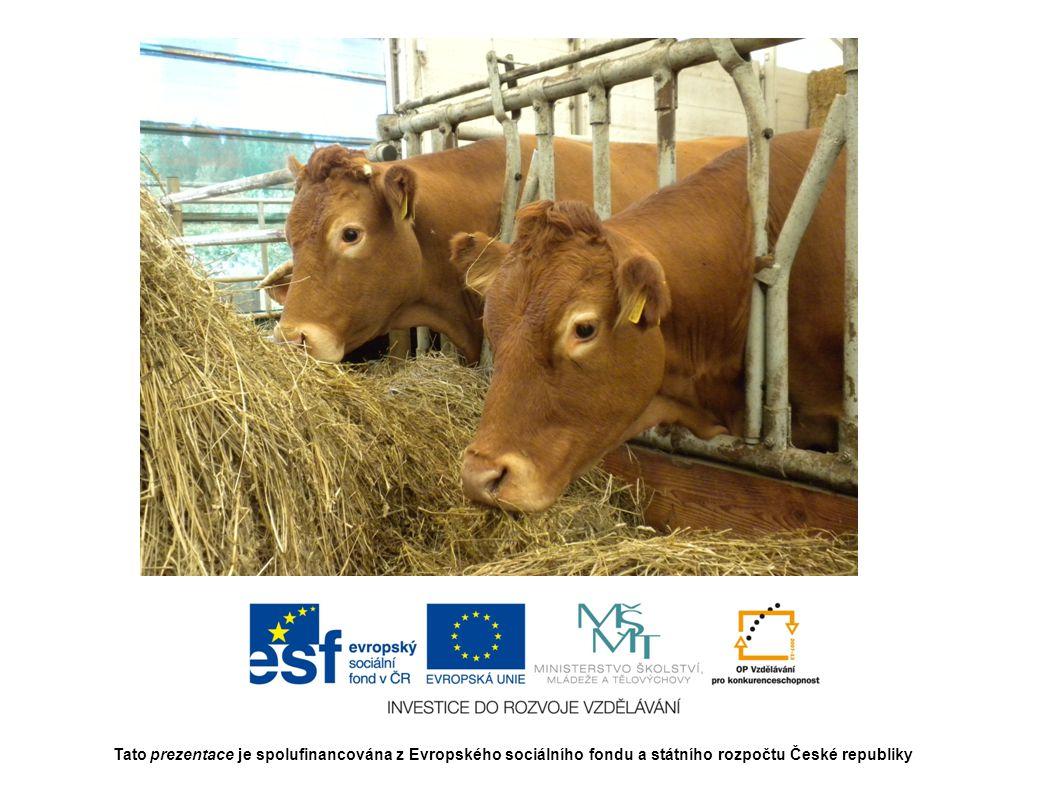 Tato prezentace je spolufinancována z Evropského sociálního fondu a státního rozpočtu České republiky