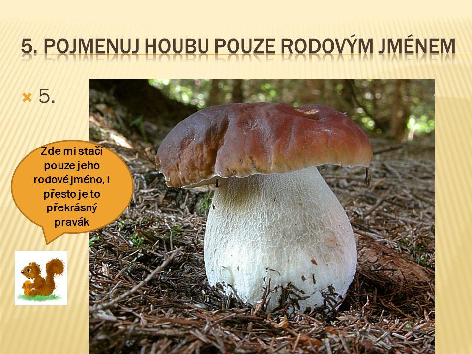 5. Pojmenuj houbu pouze rodovým jménem