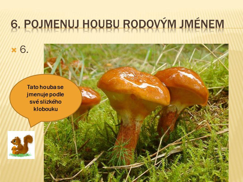 6. Pojmenuj houbu rodovým jménem