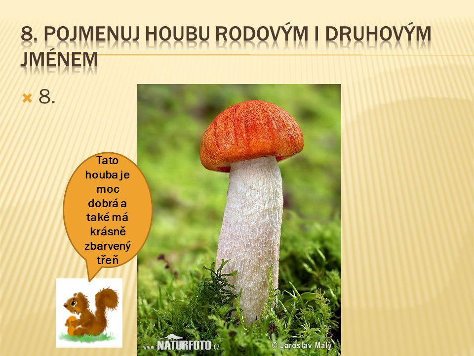 8. Pojmenuj houbu rodovým i druhovým jménem