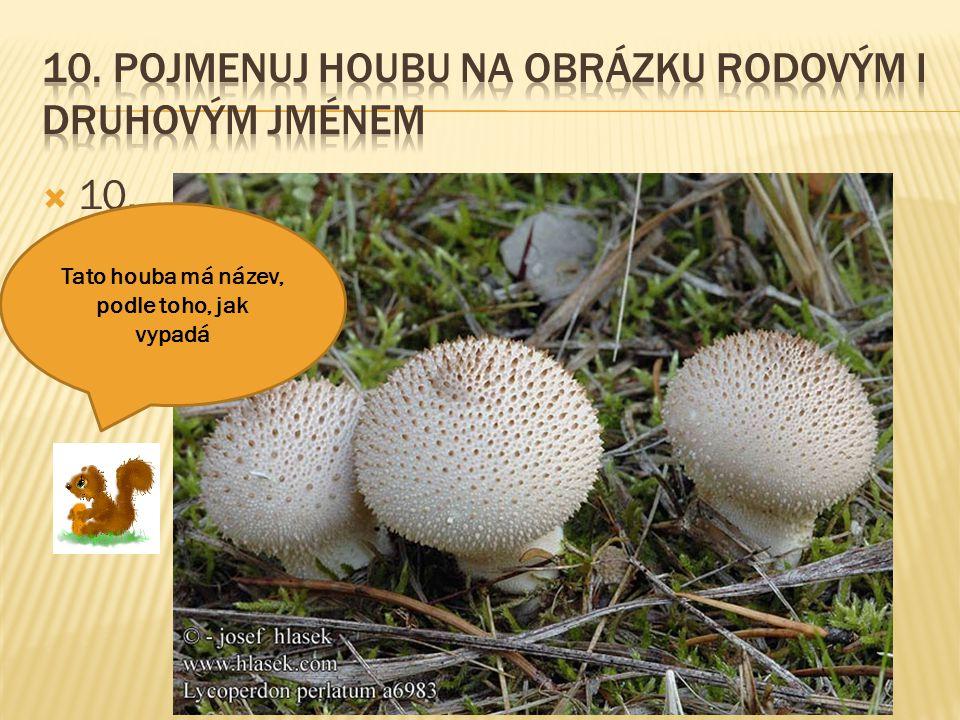 10. Pojmenuj houbu na obrázku rodovým i druhovým jménem