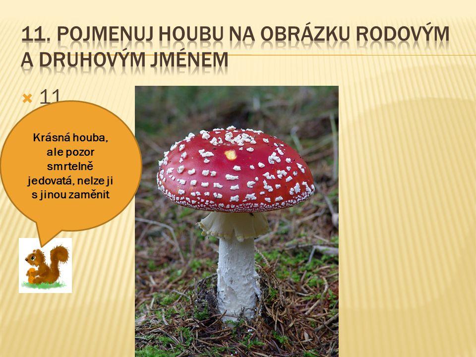 11. Pojmenuj houbu na obrázku rodovým a druhovým jménem