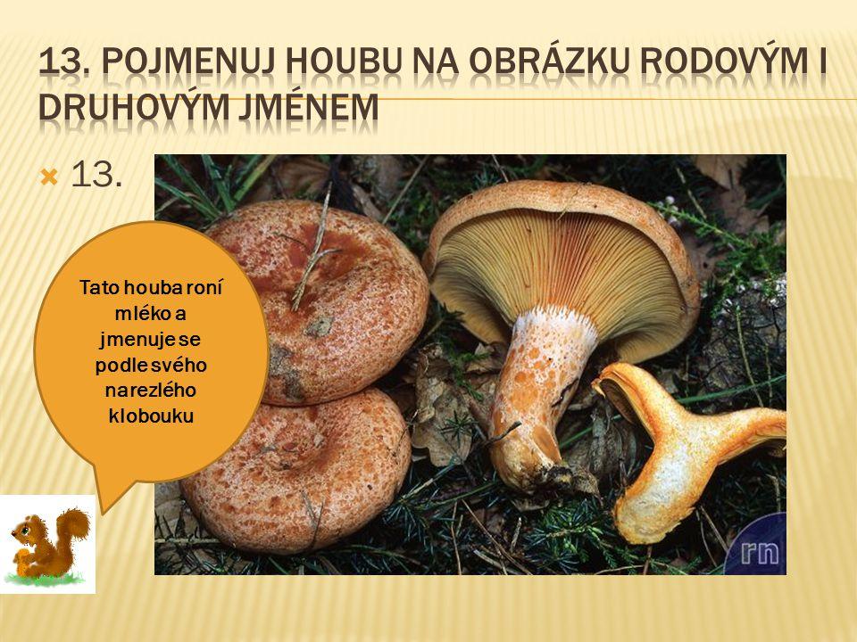 13. Pojmenuj houbu na obrázku rodovým i druhovým jménem