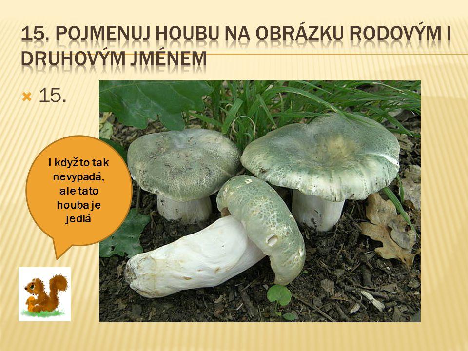 15. Pojmenuj houbu na obrázku rodovým i druhovým jménem