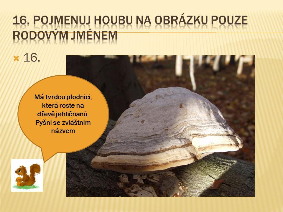 16. Pojmenuj houbu na obrázku pouze rodovým jménem