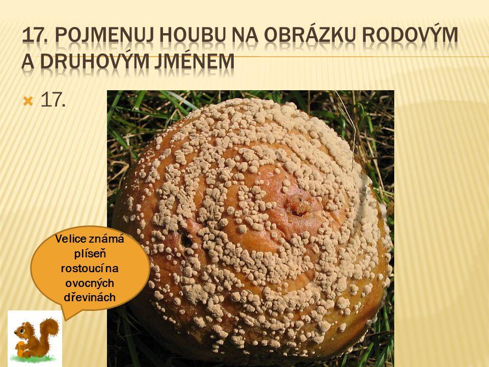 17. Pojmenuj houbu na obrázku rodovým a druhovým jménem