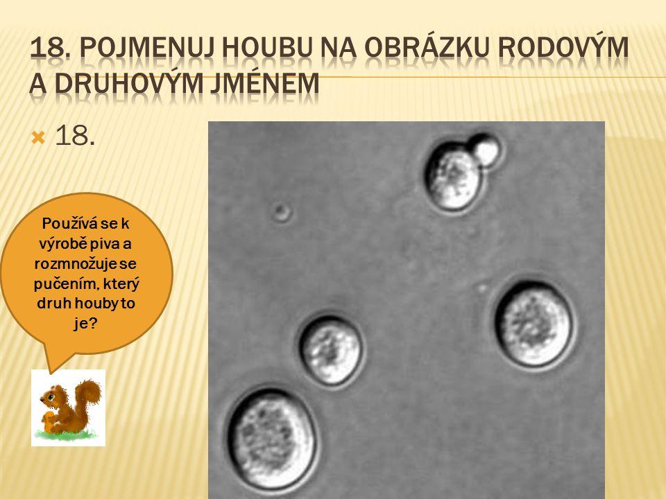 18. Pojmenuj houbu na obrázku rodovým a druhovým jménem