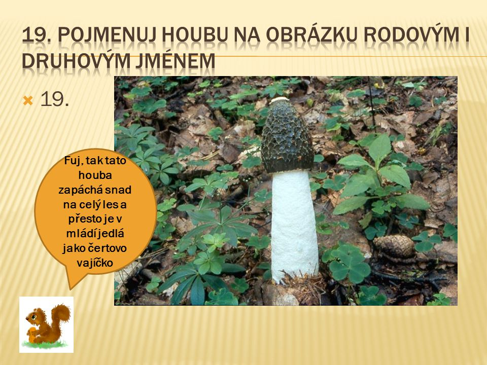 19. Pojmenuj houbu na obrázku rodovým i druhovým jménem