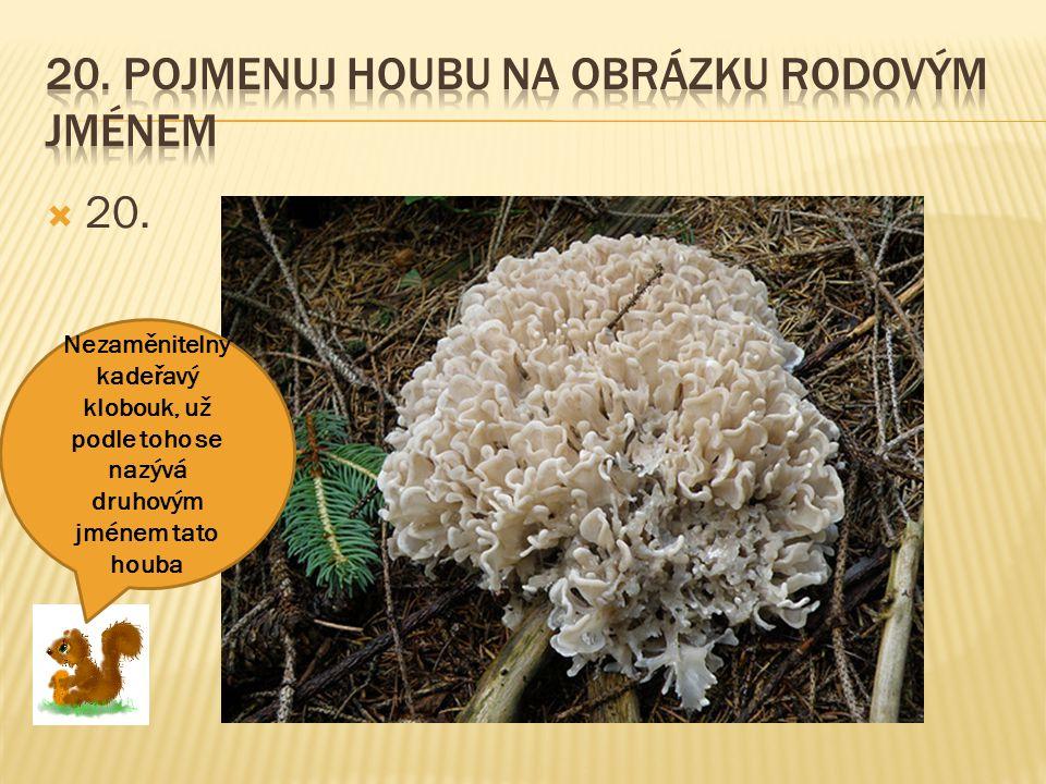 20. Pojmenuj houbu na obrázku rodovým jménem
