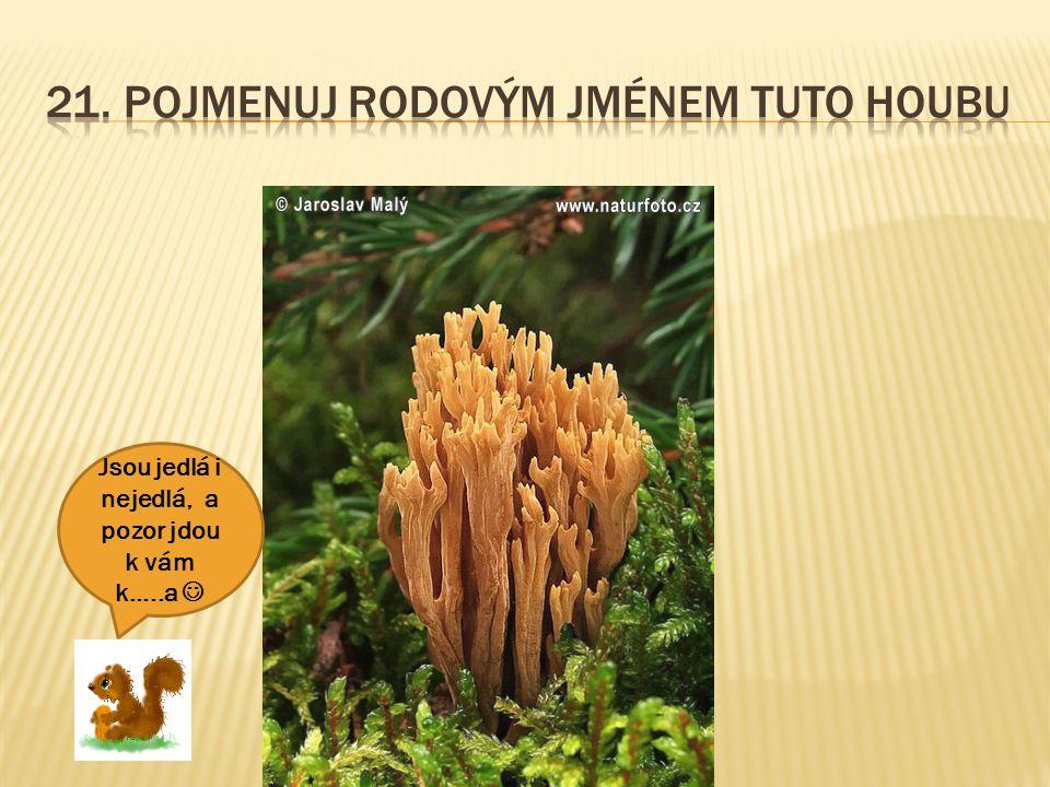 21. Pojmenuj rodovým jménem tuto houbu