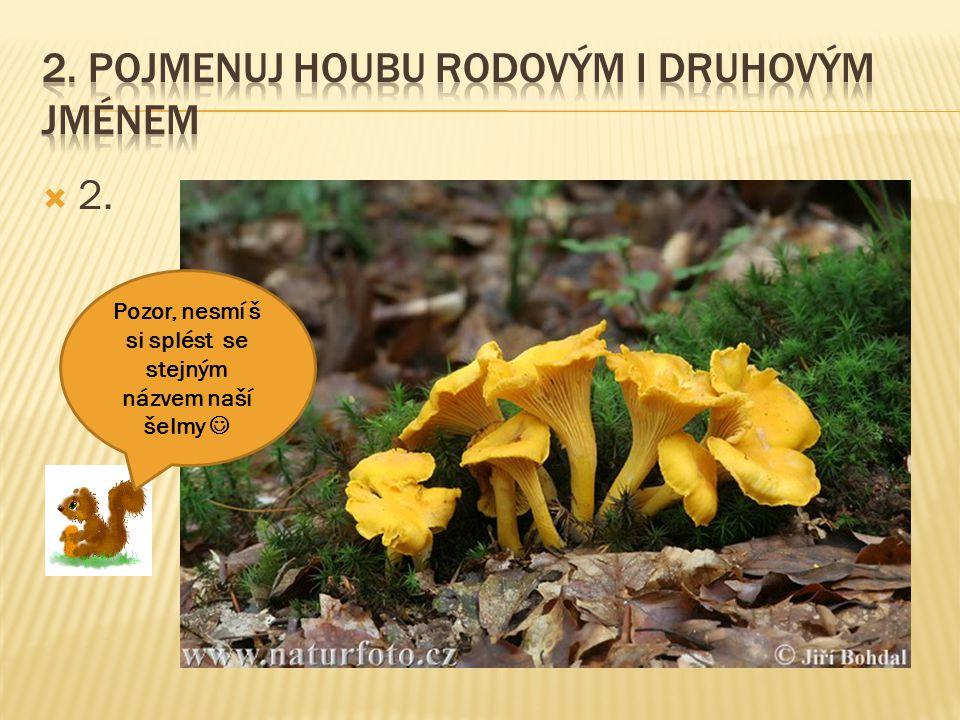 2. Pojmenuj houbu rodovým i druhovým jménem