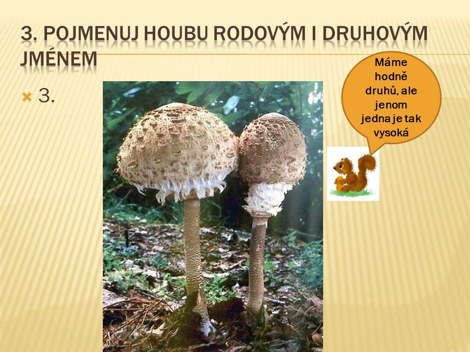 3. Pojmenuj houbu rodovým i druhovým jménem