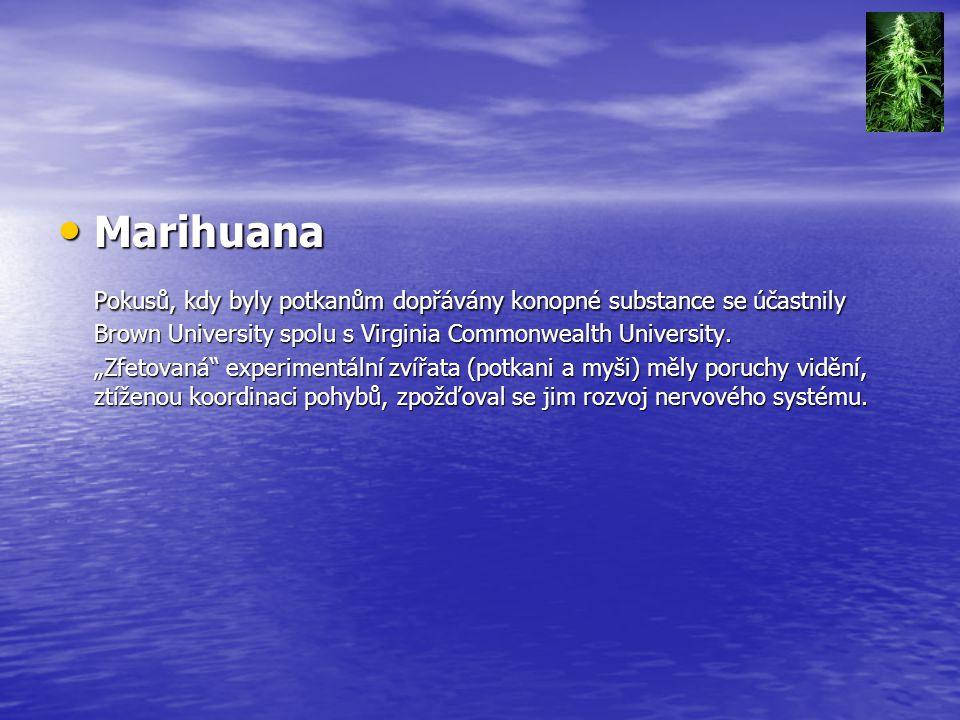 Marihuana Pokusů, kdy byly potkanům dopřávány konopné substance se účastnily Brown University spolu s Virginia Commonwealth University.
