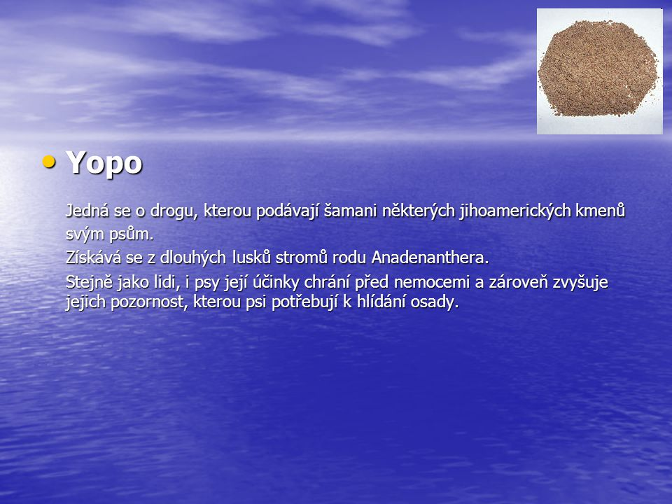 Yopo Jedná se o drogu, kterou podávají šamani některých jihoamerických kmenů svým psům. Získává se z dlouhých lusků stromů rodu Anadenanthera.