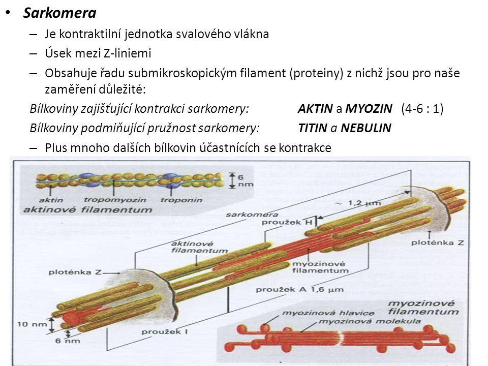 Sarkomera Je kontraktilní jednotka svalového vlákna