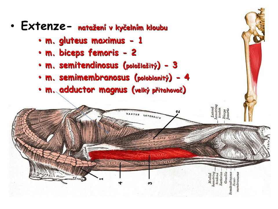 Extenze- natažení v kyčelním kloubu