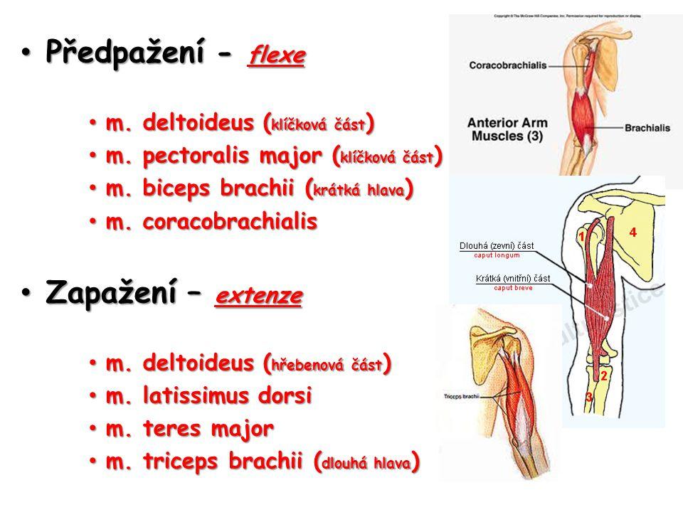 Předpažení - flexe Zapažení – extenze m. deltoideus (klíčková část)