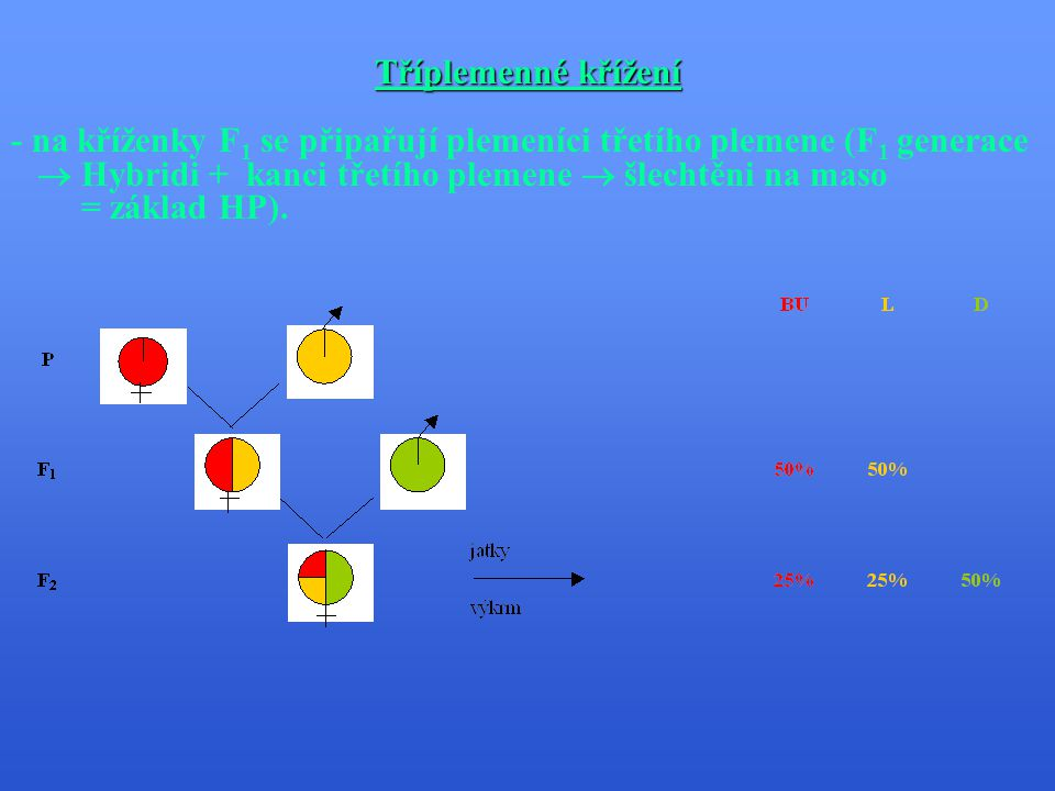 Tříplemenné křížení - na kříženky F1 se připařují plemeníci třetího plemene (F1 generace.  Hybridi + kanci třetího plemene  šlechtěni na maso.