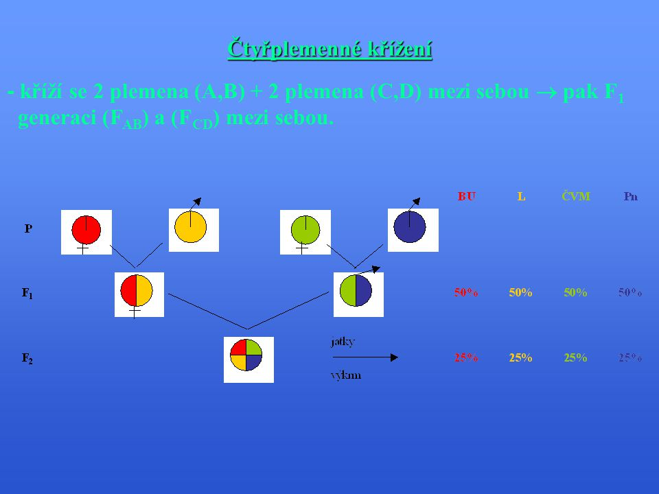 Čtyřplemenné křížení - kříží se 2 plemena (A,B) + 2 plemena (C,D) mezi sebou  pak F1.