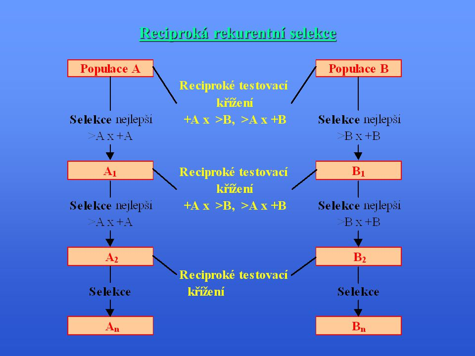 Reciproká rekurentní selekce