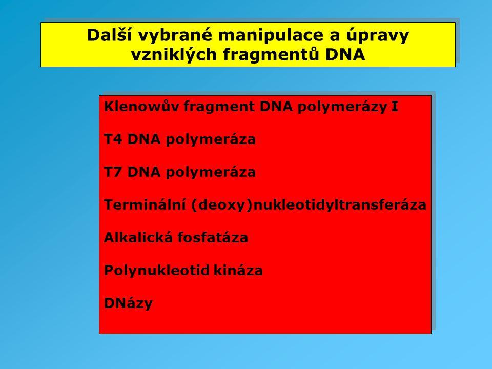 Další vybrané manipulace a úpravy vzniklých fragmentů DNA