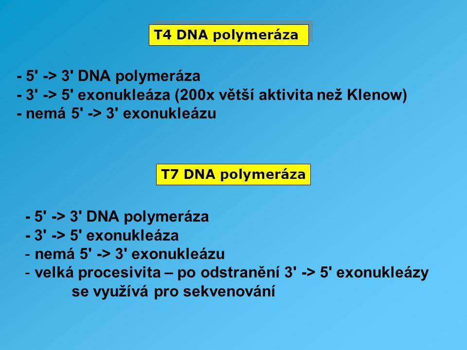 - 3 -> 5 exonukleáza (200x větší aktivita než Klenow)