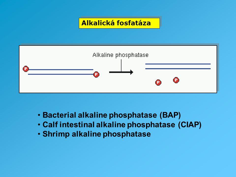 Bacterial alkaline phosphatase (BAP)