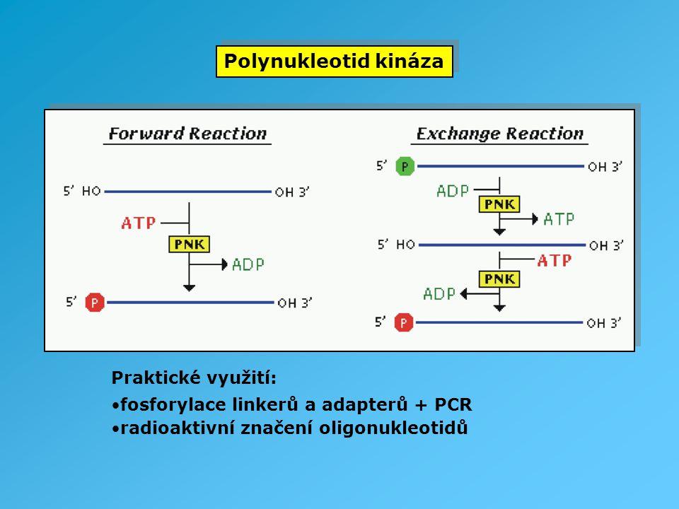 Polynukleotid kináza Praktické využití: