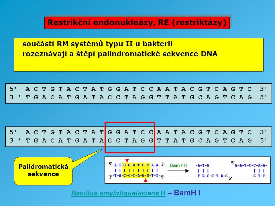 Restrikční endonukleázy, RE (restriktázy)