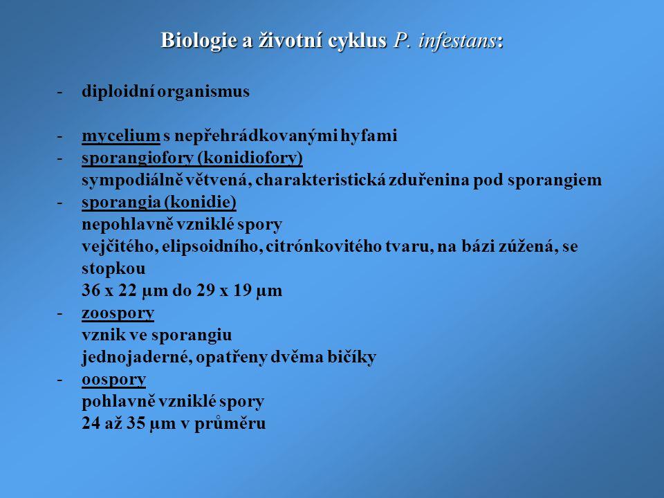 Biologie a životní cyklus P. infestans: