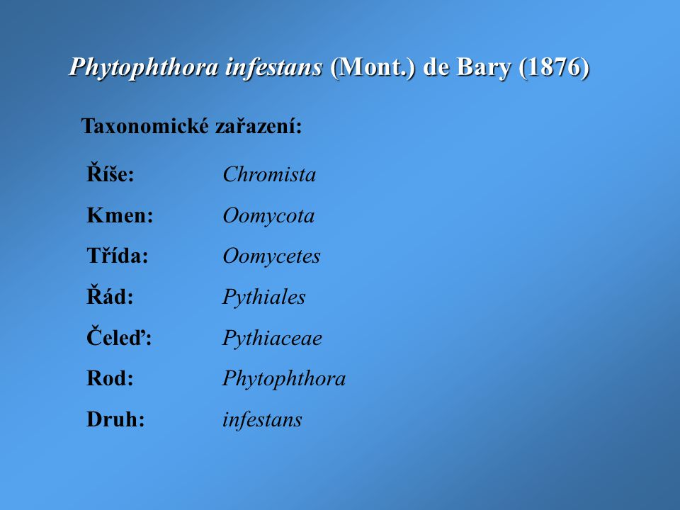 Phytophthora infestans (Mont.) de Bary (1876)