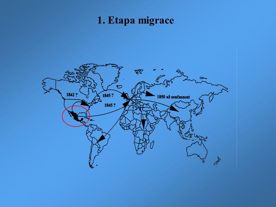 1. Etapa migrace