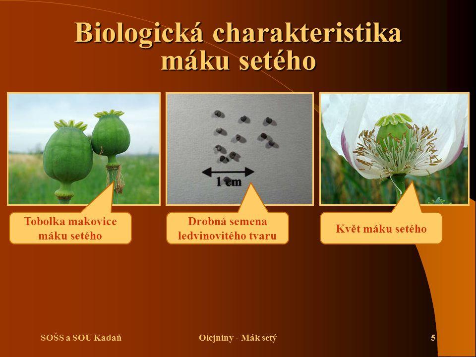 Biologická charakteristika máku setého