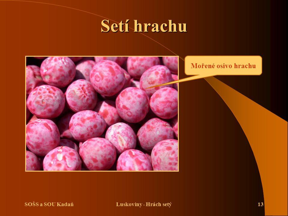 Setí hrachu Mořené osivo hrachu SOŠS a SOU Kadaň