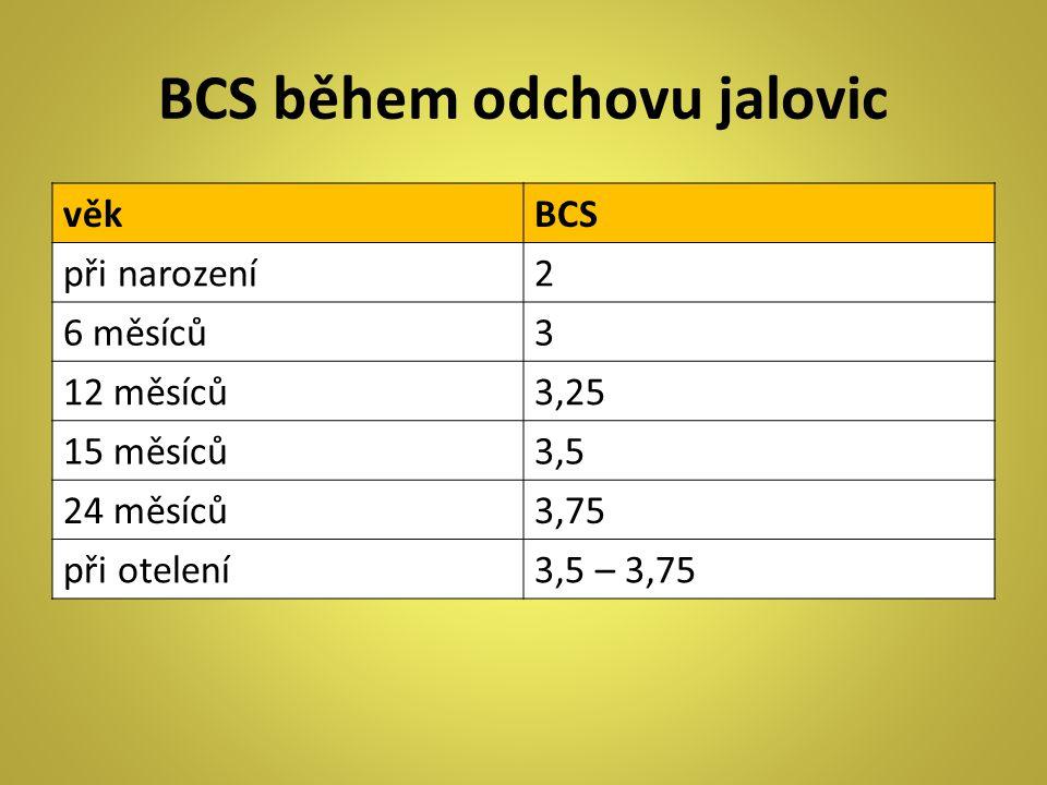 BCS během odchovu jalovic