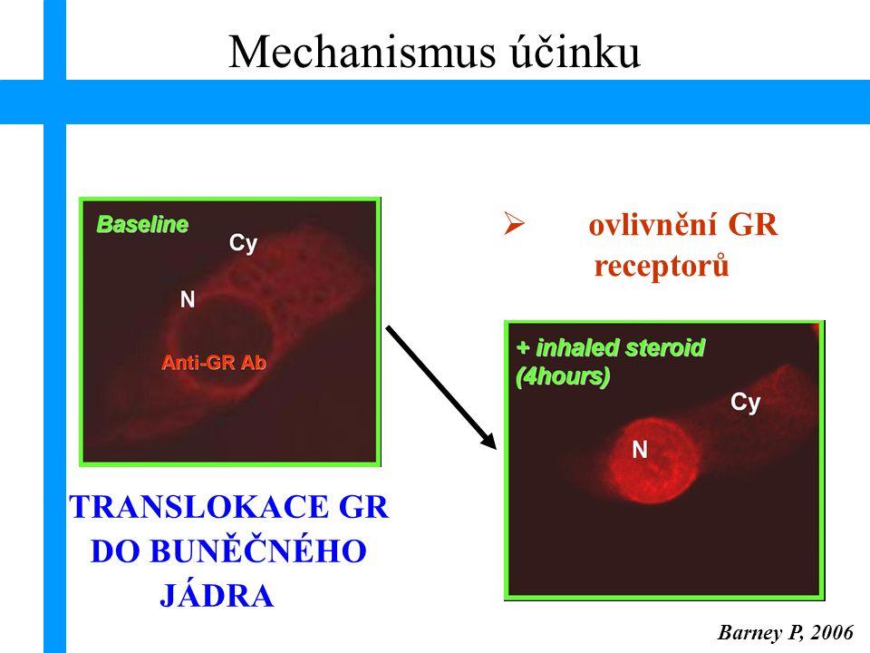 ovlivnění GR receptorů