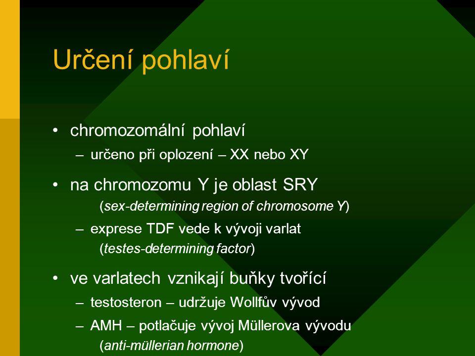 Určení pohlaví chromozomální pohlaví na chromozomu Y je oblast SRY