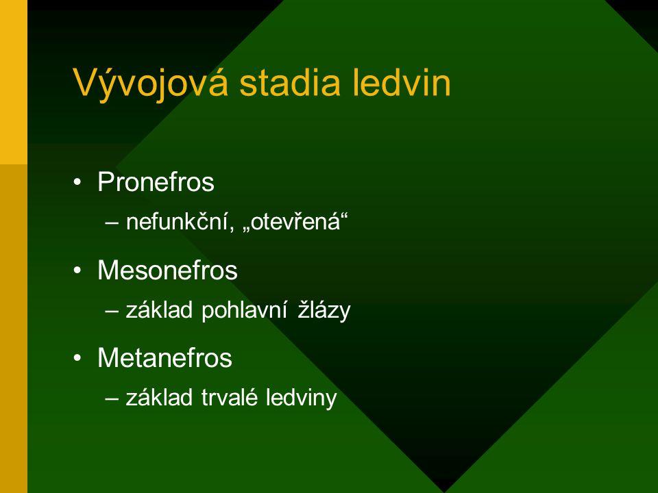 Vývojová stadia ledvin