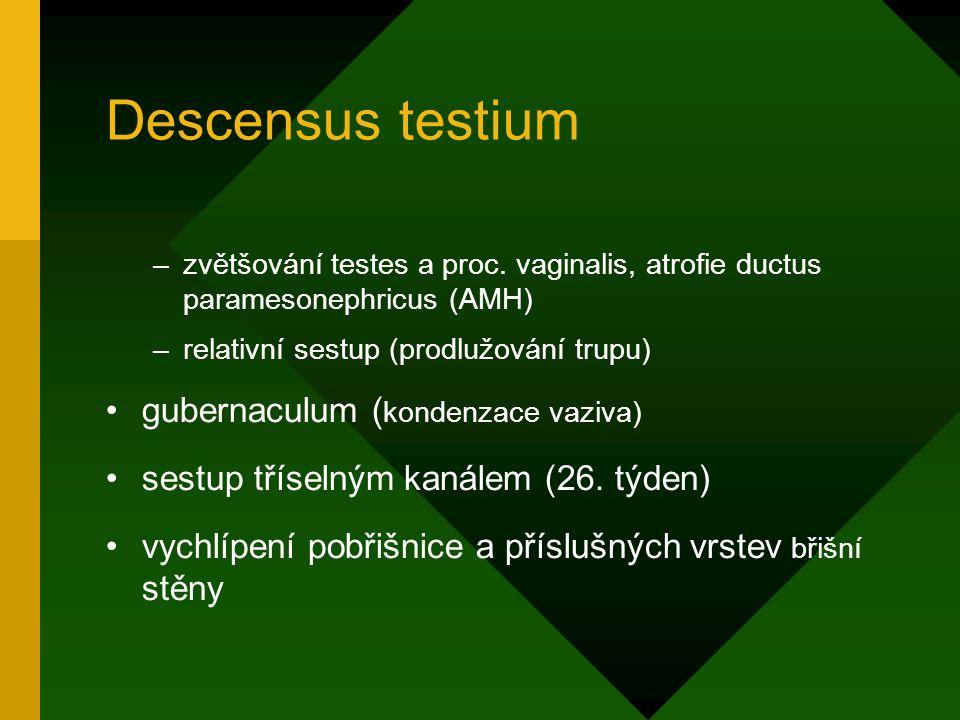 Descensus testium gubernaculum (kondenzace vaziva)