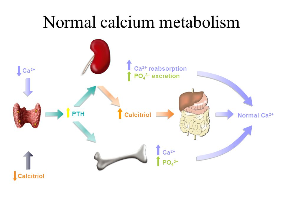 Normal calcium metabolism