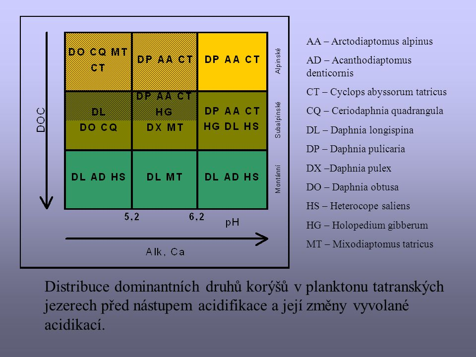 AA – Arctodiaptomus alpinus