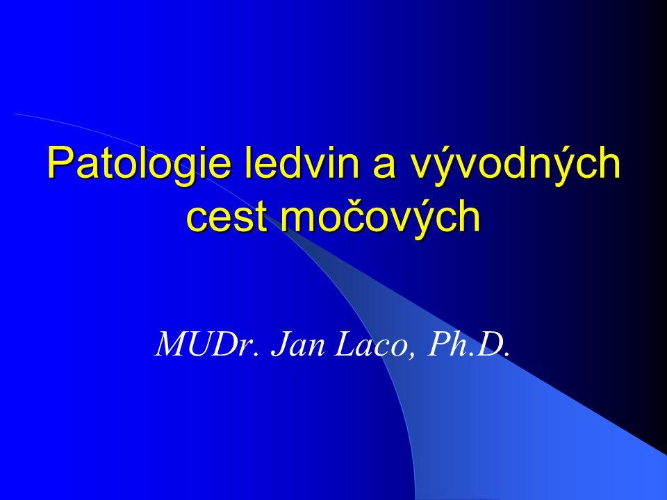 Patologie ledvin a vývodných cest močových